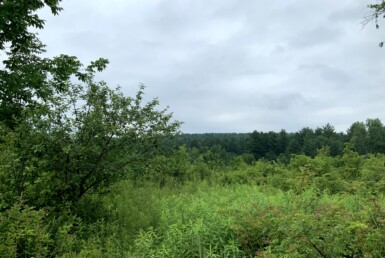 5 acres Scenic Off-Grid Building Site Florence NY