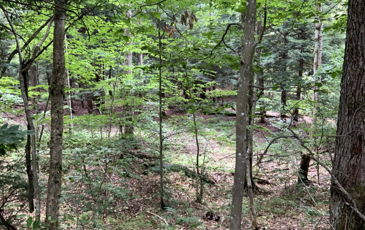 17 acres Hunting Land for Sale, Borders Stone Hill State Forest, Amboy, NY!