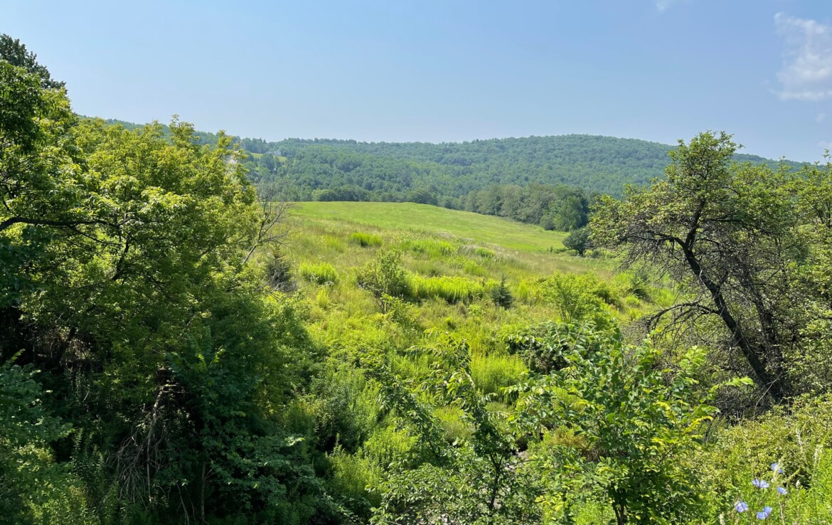 5.3 acre Land for Sale with Open Building Site, Norwich, NY!