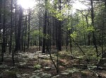 67 Acres Remote Wilderness Hunting Land Diana NY