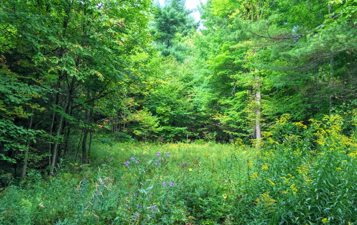 10 Acre Land for Sale Across from Trout Lake State Forest, Edwards, NY!