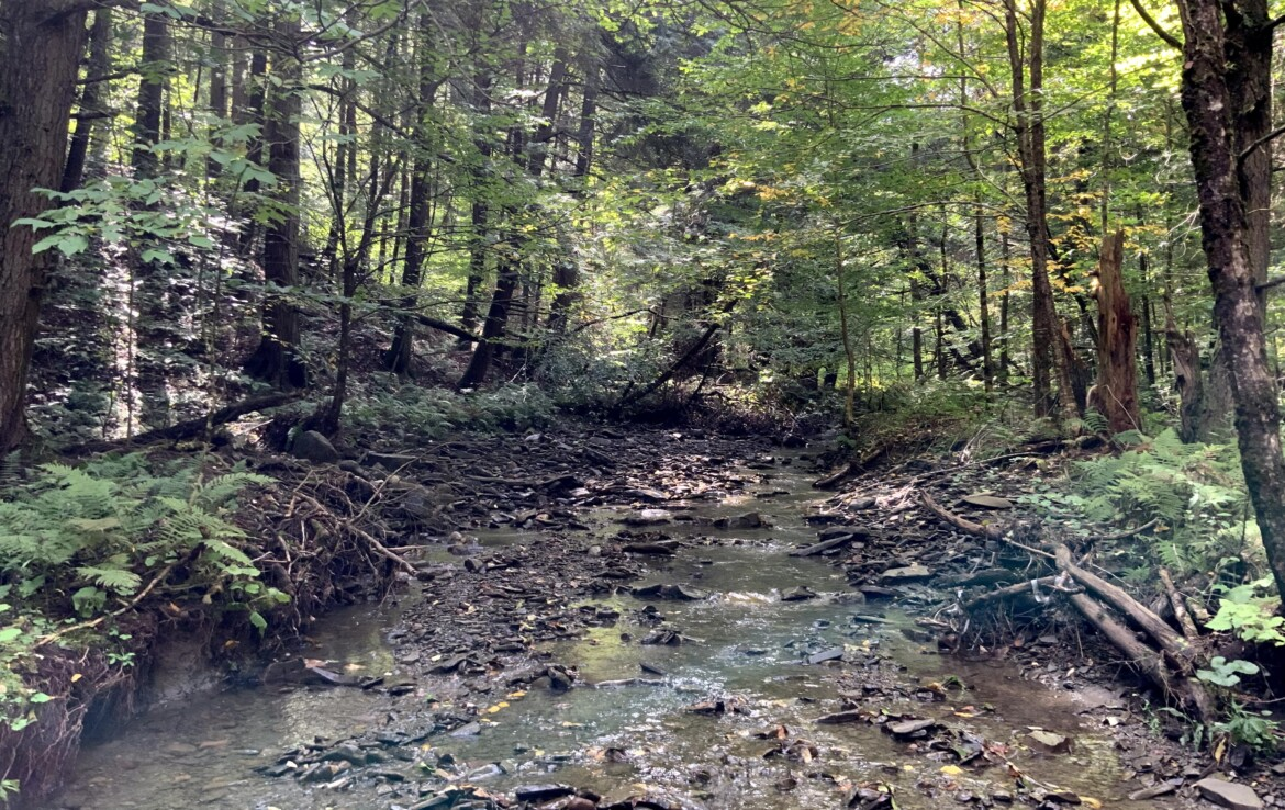 52 acres Southern Tier Hunting Land For Sale, Cuyler, NY!