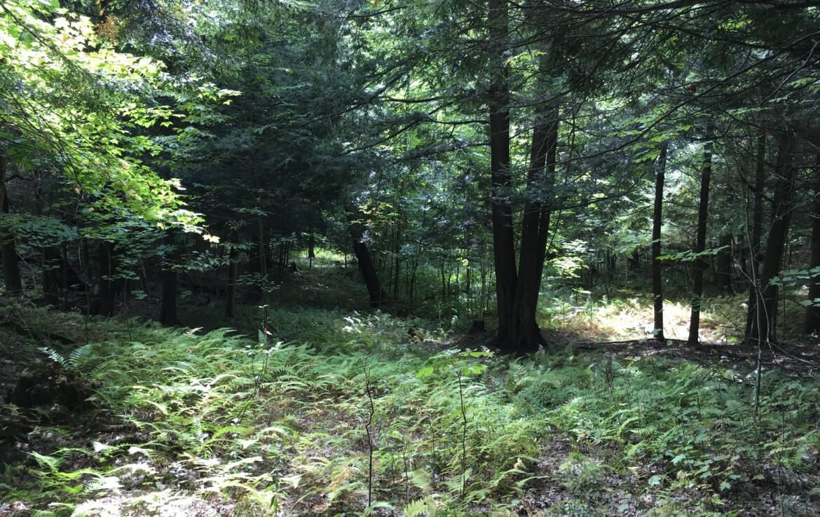 Perfect Hunting Camp Lot with Views on 4 Season Road and Power Available!