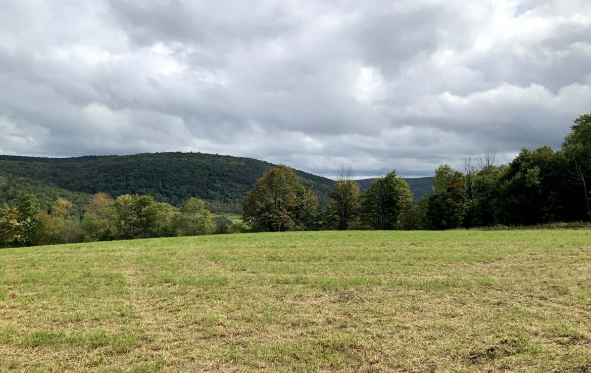 Cleared Home Site Bordering State Land with Driveway & Electric Available!
