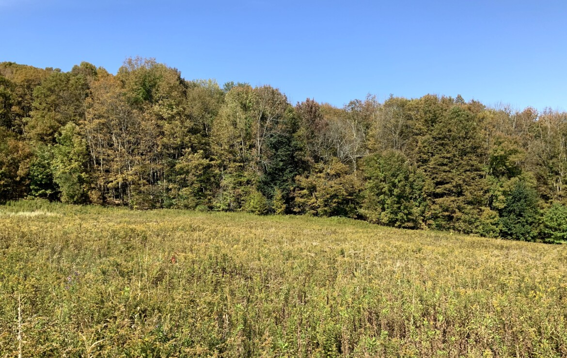 10 acres Hunting Land for Sale Near Horse Trails, Columbus, NY!