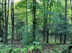 25 acres Hunting Land for Sale Bordering State Forest, Annsville, NY!