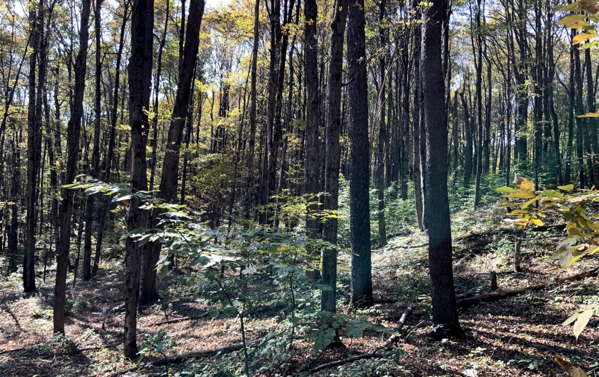 Great Hunting Camp Lot, Walk to State Forest, Near Snowmobile Trails!