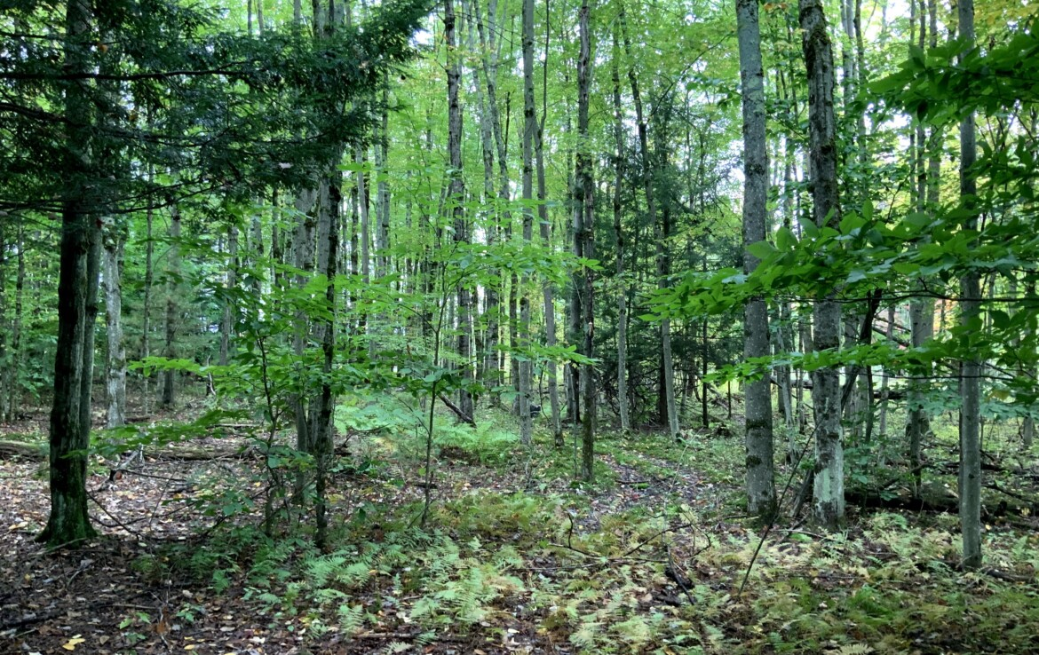 Perfect Location! Close to Stateland and Snowmobile/ATV Trails!